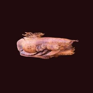 Tượng Cá Kim Long gỗ hương 63x23x15cm