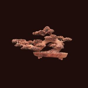 Bonsai tùng gỗ hương Gia Lai 47x89x23cm