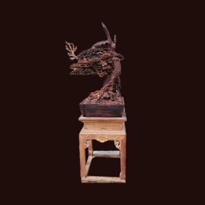 Cây tùng bonsai gỗ trắc 80x46x28cm